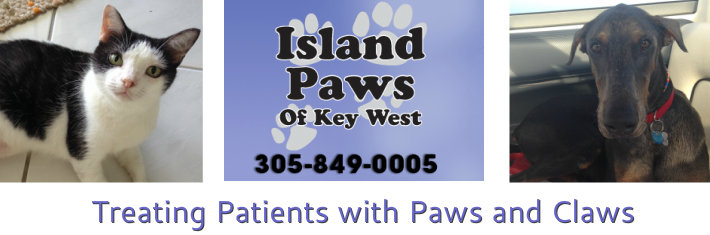 Islandpawshousecalls.com